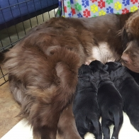 Newfie Males and Females